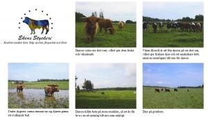 Bilder från Östra Eketorps gård och dess djur.
