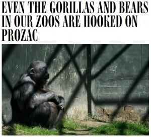 psykofarmaka-till-gorillor-pa-zoo-001